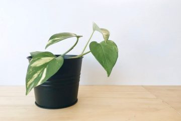 Green plant in a black pot on a light wooden surface